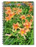 Field Of Tiger Lilies Spiral Notebook