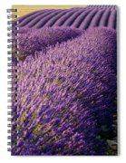 Fields Of Lavender Spiral Notebook