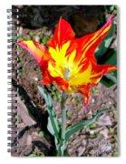 Fiery Beauty Spiral Notebook