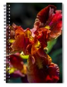 Fiery Iris Spiral Notebook