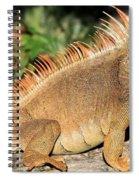 Fiery Red Spiral Notebook
