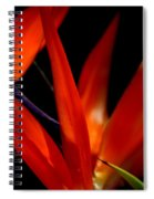 Fiery Red Bird Of Paradise Spiral Notebook