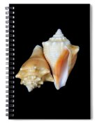 Fighting Conch Seashells Spiral Notebook