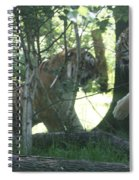 Fighting Siberian Tigers Spiral Notebook
