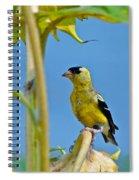 Finch Finale Spiral Notebook
