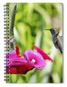 Fine Feathered Hummingbird Spiral Notebook