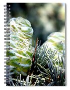 Fir Cone Spiral Notebook