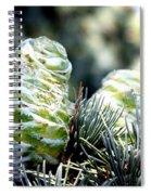 Fir Cone Spiral Notebook