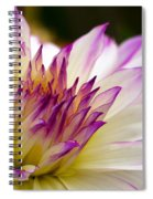 Fire And Ice - Dahlia Spiral Notebook