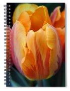 Fire Orange Tulip Flowers Spiral Notebook