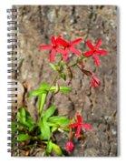 Fire Pinks Spiral Notebook