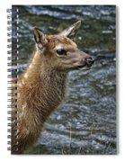 Firehole River Elk Fawn Spiral Notebook