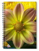 Fireworks Dahlia Spiral Notebook