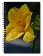First Bloom - Lily Spiral Notebook