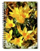 First Crocus Serenade Spiral Notebook