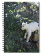 First Ledge Leap Spiral Notebook