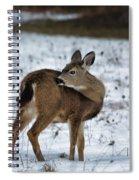 First Winter Spiral Notebook