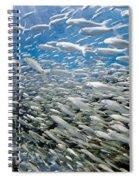 Fish Freeway Spiral Notebook
