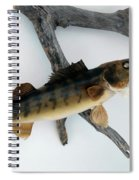 Fish Mount Set 02 A Spiral Notebook
