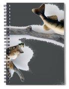 Fish Mount Set 06 B Spiral Notebook