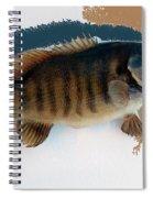 Fish Mount Set 10 Cc Spiral Notebook