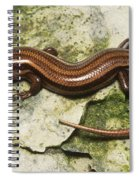 Five-lined Skink Spiral Notebook