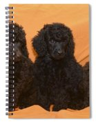 Five Poodle Puppies  Spiral Notebook