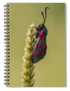 Five Spot Burnet Spiral Notebook