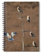 Five White-tailed Kite Siblings Spiral Notebook