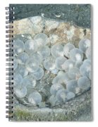 Flamboyant Cuttlefish Eggs Spiral Notebook