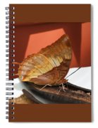 Flame-bordered Charaxes Butterfly #2 Spiral Notebook