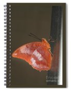 Flame-bordered Charaxes Butterfly #3 Spiral Notebook