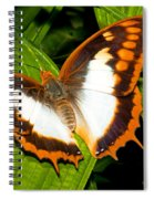Flame Bordered Charaxes Butterfly Spiral Notebook