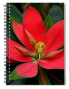 Flame Of Jamaica Spiral Notebook