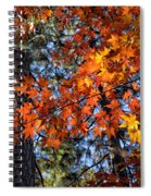 Flaming Maple Beneath The Pines Spiral Notebook