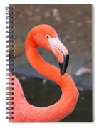 Flamingo Close Up Spiral Notebook