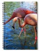 Flamingo Duo Spiral Notebook