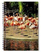 Flamingo Family Reunion Spiral Notebook