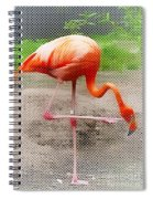 Flamingo Four Spiral Notebook