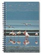 Flamingo On Lake Nakuru Spiral Notebook