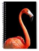 Flamingo Portrait Spiral Notebook