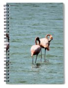 Flamingos Gathering Together Spiral Notebook