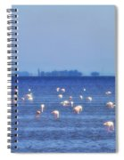 Flamingos In The Pond Spiral Notebook