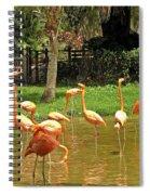 Flamingos Wading Spiral Notebook