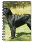 Flat-coated Retriever Dog Spiral Notebook