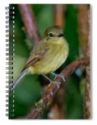 Flavescent Flycatcher Spiral Notebook