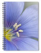 Blue Flax Close-up Spiral Notebook