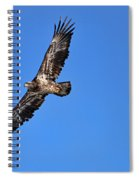 Fledgling Bald Eagle 5048 Spiral Notebook