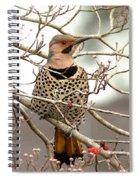 Flicker - Alabama State Bird - Attention Spiral Notebook