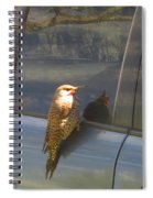 Flicker Looking At His Reflection Spiral Notebook
